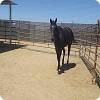 Adopt A Pet :: A1053464 - Bakersfield, CA
