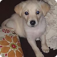 Adopt A Pet :: Castle - Staunton, VA