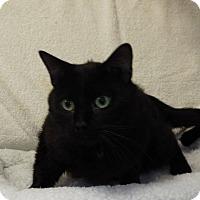 Adopt A Pet :: Aladdin - Shelby, MI