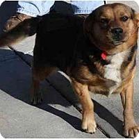 Adopt A Pet :: Taffy - Toronto/Etobicoke/GTA, ON