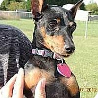 Adopt A Pet :: Cha Cha - Nashville, TN