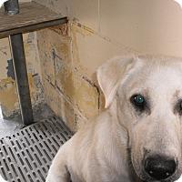 Adopt A Pet :: Crosby - Wallaceburg, ON