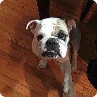 Adopt A Pet :: Stella - Decatur, IL
