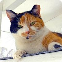 Adopt A Pet :: Ella - Victor, NY