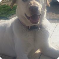 Adopt A Pet :: Serendipity (Seren) - New Windsor, NY
