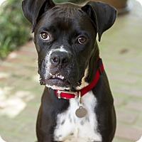 Adopt A Pet :: Ferris - Baton Rouge, LA