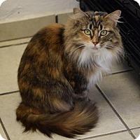 Adopt A Pet :: Calypso - DFW Metroplex, TX