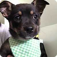 Adopt A Pet :: Toby - Burlington, NJ
