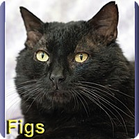 Adopt A Pet :: Figs - Aldie, VA