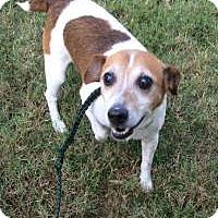 Adopt A Pet :: JAX - Sherman, CT