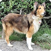 Adopt A Pet :: Cyrano - Riverside, CA