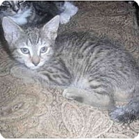Adopt A Pet :: Toil - West Park, NY