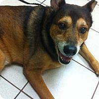 Adopt A Pet :: Blossom - Sponsor - Jacksonville, FL