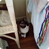 Adopt A Pet :: Suzette - Fairborn, OH