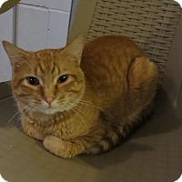 Adopt A Pet :: Mylo - Geneseo, IL