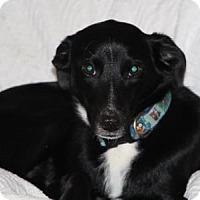 Adopt A Pet :: Rita - Avon, NY
