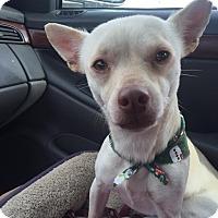 Adopt A Pet :: Tyler - Vidor, TX