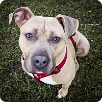 Adopt A Pet :: Sully - St. Louis Park, MN