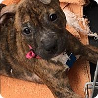 Adopt A Pet :: Giselle - Houston, TX
