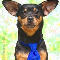 Adopt A Pet :: Sharky - Dublin, CA