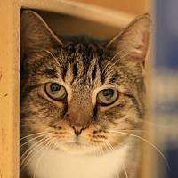 Adopt A Pet :: Buffy - Cary, NC