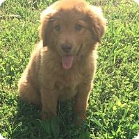 Adopt A Pet :: Marigold - Sylacauga, AL