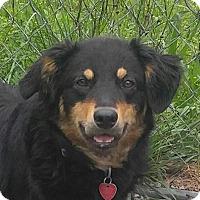 Adopt A Pet :: Maggie (TIA) - Harrisonburg, VA