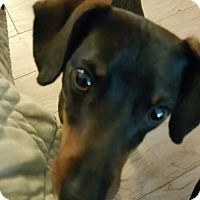 Adopt A Pet :: ERNIE - Jackson, NJ