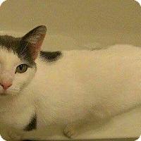 Adopt A Pet :: Miss Butters - Lexington, KY