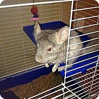 Adopt A Pet :: Cheerio - Granby, CT