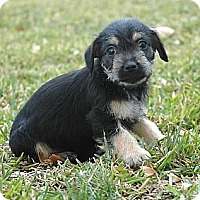 Adopt A Pet :: May - La Habra Heights, CA