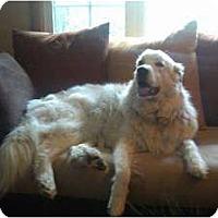 Adopt A Pet :: Meka - Minneapolis, MN