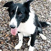 Adopt A Pet :: Cate (Courtesy Listing) - Savannah, GA