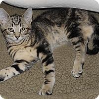 Adopt A Pet :: Carter 2 - Plainville, MA