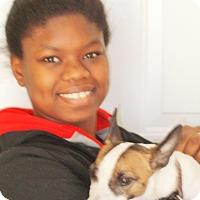 Adopt A Pet :: Tiger - Plain City, OH