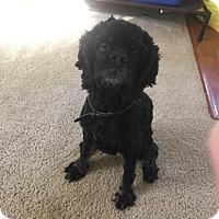 Adopt A Pet :: Dash -Adopted! - Kannapolis, NC