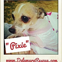 Adopt A Pet :: Pixie - Seaford, DE