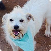 Adopt A Pet :: Otter - Phoenix, AZ