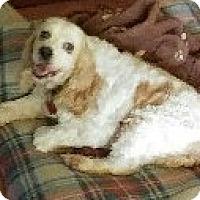 Adopt A Pet :: Leena - Sugarland, TX