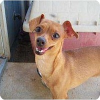 Adopt A Pet :: Sofia - Templeton, CA