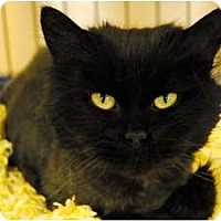 Adopt A Pet :: Miranda - Lunenburg, MA