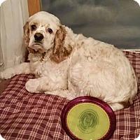 Adopt A Pet :: Rocky-Courtsey listing - Menomonee Falls, WI