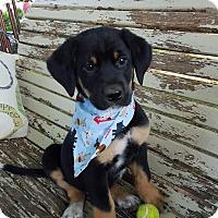 Adopt A Pet :: Wally - Adamsville, TN