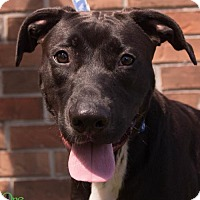 Adopt A Pet :: Montana - Savannah, GA