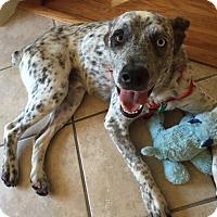 Adopt A Pet :: Hank - Austin, TX