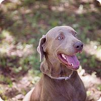 Adopt A Pet :: Rex - Lewisville, IN