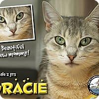 Adopt A Pet :: Gracie - Davenport, IA