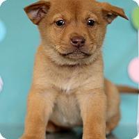 Adopt A Pet :: Poison Ivy - Waldorf, MD