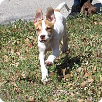 Adopt A Pet :: Jackson - Broken Arrow, OK