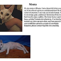 Adopt A Pet :: Moana - Sterling Heights, MI